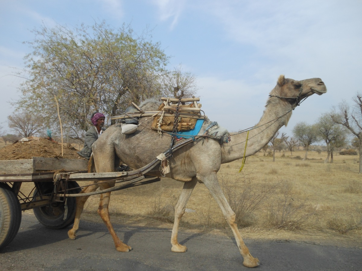 राजस्थान दिवसः याद आता है बहुरंगी विविधता वाला प्रदेश